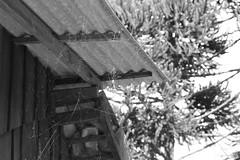 Spider (tatiana barthem) Tags: spider aranha teia blackwhite blackandwhite bw tonsdecinza canon monochrome monocromatico telhado tecendo aracnofobia nature natureza seres aracnideo lamdscape