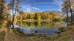 *Swiss autumn dream* (Albert Wirtz @ Landscape and Nature Photography) Tags: albertwirtz palpuognasee laidapalpuogna graubünden swiss switzerland schweiz herbst autumn fall larch lärchen tree baum forest wald natur reflection spiegelung wasser water lake lago autunno panorama panoramic nature natura paesaggi paysage landscape campo campagne campagna paisaje nikon d810 sunny sonnig bluesky blauerhimmel hiking trail wandern bergün bravuogn kantongraubünden bündnerland albertwirtzlandschaftsundnaturfotografie albertwirtzlandscapeandnaturephotography albertwirtzphotography goldenoctober goldeneroktober highresolution hoheauflösung