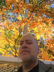 Day 2477: Day 287: How about those leaves? (knoopie) Tags: 2018 october iphone picturemail doug knoop knoopie me selfportrait 365days 365daysyear7 year7 365more day2477 day287 leaves autumn