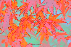 Leaves. (martin 123) Tags: nationaltrust nikon nikond7100 d7100 leaf sheffieldpark sussex colour