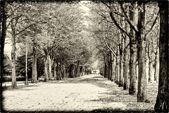 Autumn on the Champs Elysees / Осень на Елисейских полях (dmilokt) Tags: чб bw черный белый black white сепия sepia dmilokt пейзаж landscape