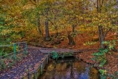 Wee bridge (xDigital-Dreamsx) Tags: landscape naturephotography autumn trees woodland forest bridge stream foliage fence november