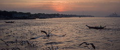 Sunset over the river, Yangon, Myanmar (Alfie   Japanorama) Tags: hasselblad hasselbladx1d burma myanmar river seagulls sunset water boats travelphotography travel onassignment professionalphotography asia cinematic widescreen