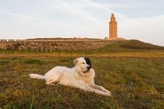 Pirata (Otylgar) Tags: agua amanecer dog españa faro galicia lighthouse mar mascota ocean oceano perro pet pirata spain sunset water