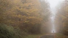 Mushroom hunter (Jean-Luc Peluchon) Tags: fz1000 forest forêt arbre tree route road brouillard brume fog haze mist autumn automne bois woods color faded promeneur walker france aquitaine
