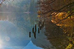 An afternoon in November at the Thumsee lake (echumachenco) Tags: lake water reflection november autumn autumncolors fall grass tree plant wood forest thumsee badreichenhall berchtesgadenerland bavaria bayern germany deutschland nikond3100 outdoor landscape serene