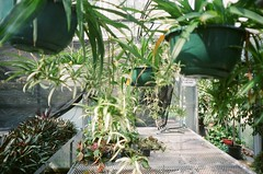 452955590010_10A (acylay) Tags: 35mm 35mmfilm filmphotography analog greenhouse horticulture plants