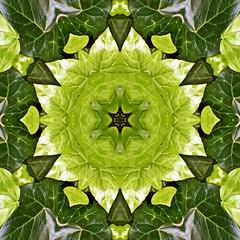 Kaleido Abstract 1902 (Lostash) Tags: art abstract edited nature patterns symmetry kaleidoscopes