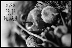 Cuando Dios repartió las habilidades, a mí me dio a elegir entre querer a mis amigos o tener buena memoria. ¡Feliz Semana Santa y feliz 1987! (elena m.d.) Tags: navidad 2018 nikon d5600 sigma sigma105 monocromo bw bn