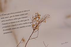 Nature - La vie - Life (MichelGuérin) Tags: 2018 canada december décembre exterior extérieur lightroomcc michelguérin nature nikon nikonafsnikkor200500mmf56eedvr nikond500 qc québec sherbrooke ca