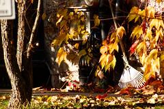 Autumn Mood With Rake (MarkusR.) Tags: d722748 mrieder markusrieder stuttgart germany wilhelma zoologischergarten zoo park botanischergarten zoologicalgarden botanicalgarden nikon d7200 nikond7200 rake rechen herbst fall autumn herbststimmung autumnmood