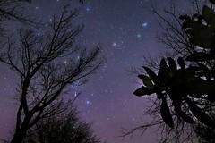 46P/Wirtanen (Scorpion-66) Tags: comet46pwirtanen cometa orion pleiades 46p canon760d tokina1120 nisinaturalnight