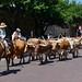 Fort Worth - Texas Longhorns