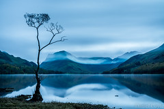 Return to Buttermere (Daniel Coyle) Tags: returntobuttermere buttermere dawn longexposure lake lakedistrict cumbria water reflections tree lonetree clouds haystacks countryside country uk england nikon nikond7100 d7100 danielcoyle hills mountains fells nationaltrust natural nature