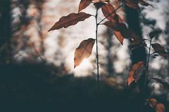 Autumn lights and silhouettes (Sjaco Manuputty) Tags: autumn autumncolors colors garden forest sunshine sunlight sun shadows silhouettes nature leaf leaves sculpturegarden sculpturepark kröllermüllermuseum krollermuller otterlo netherlands gelderland bokeh bokehballs bokehlicious