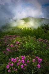 The Appalachian Mountain Beauty - 3229 (J & W Photography) Tags: 2017 appalachia appalachiamountains appalachiatrail blueridgeparkway catawbarhododendron jwphotography janebald june northcarolina roanhighlands roanmountains tennesse blossom clouds flameazaleas flower grass landscape nature plant rhogodendron tree