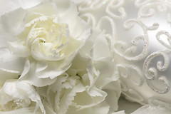 White on white (Magda Banach) Tags: canon canon80d christmasdecorations sigma150mmf28apomacrodghsm whiteonwhite carnations feathers flora flower macro macromondays plants white