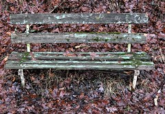 Old-age bench! (Gerlinde Hofmann) Tags: germany thuringia village bürden bench peelingpaint decaying leaf oaktree