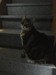 Tigger on the Stairs (sjrankin) Tags: 21january2019 edited animal cat tigger dark lights stairs stairway kitahiroshima hdr hokkaido japan