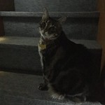 Tigger on the Stairs thumbnail