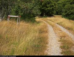 20180803_09 Gravel road, yellow grass, & trail sign | The trail Bohusleden, section 16 - Kaserna to Harska | Bohuslän, Sweden (ratexla) Tags: ratexlasbohusledenhike bohusleden bohusledenetapp16 3aug2018 2018 canonpowershotsx50hs bohuslän sweden sverige scandinavia scandinavian europe earth tellus travel travelling traveling journey epic photophotospicturepicturesimageimagesfotofotonbildbilder wanderlust vacation holiday semester trip backpacking resaresor europaeuropean sommar summer ontheroad nordiccountries norden skandinavien hiking hike beautiful vandra vandring grass field fields gräs vandringsled vandringsleder landscape scenery scenic trail trails road unpaved grusväg mittsträng väg vägar landsväg
