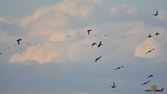 A-LUR_3076 (OrNeSsInA) Tags: taly passignano panicale natura panorami campagma campagna landescape trasimeno nikon canon airone airon cormorano spettacolo birdwatching albero cielo animale mare acqua uccello
