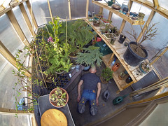 The Escape Room (The.Mickster) Tags: self wideangle winter gopro fisheye facedowntuesday fdt plants randy garden greenhouse hereios bonsai wah