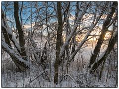Nordbytjernet 9. desember 2018 #3 (Krogen) Tags: norge norway norwegen akershus romerike ullensaker nordbytjernet landscape landskap vinter winter krogen panasoniclumixgx7
