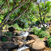 Tropischer Fluss Queen's Bath Kauai Hawaii