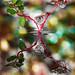 Drops e Flowers Gocce e Fiori Riflessi by Mario JR Nicorelli con Nikon D300s Macro fotografia - Macro Photography - Macro Foto