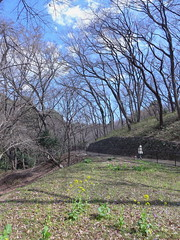 19o1752 (kimagurenote) Tags: tree 東高根森林公園 higashitakane forest park 川崎市宮前区 miyamaekawasaki