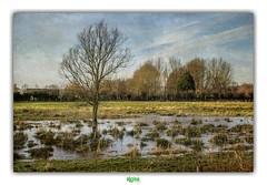 MARAIS DE GUINES (2) (régisa) Tags: marsh marais guines pasdecalais arbre tree