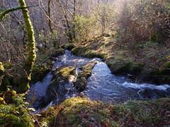 Glasdrum National Nature Reserve (Niall Corbet) Tags: scotland argyll glasdrum nationalnaturereserve nnr