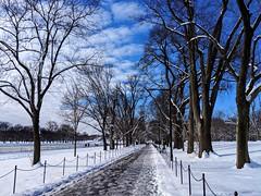snowy walk (ekelly80) Tags: dc washingtondc january2019 winter snurlough snow snowstorm shutdown trumpshutdown snowday snowywalk white snowy nationalmall reflectingpool path walk trees sky blue light sun