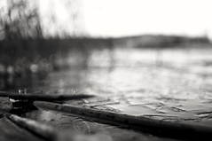 By the lake (Stefano Rugolo) Tags: stefanorugolo pentax k5 pentaxk5 kmount kepcorautowideanglemc28mm128 ricohimaging impression bythelake lake waterfront water ice reeds depthoffield dof bokeh abstract monochrome blackandwhite hälsingland sweden sverige blur pof focus manualfocuslens wideangle manualfocus manual vintagelens hills november sky