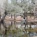 Otter Springs Park