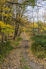 Autumn Walk (JMS2) Tags: nature autumn park trail walk trees foliage