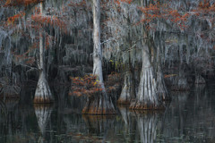Last Minutes of Fall (Willie Huang Photo) Tags: swamps swamp bayou cypress baldcypress autumn leaves foliage colors red water reflection southeast landscape nature trees scenic forest
