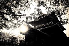 日向 - 06