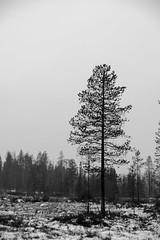 lapland (French_landscape_photographer) Tags: muonio lappi finland fi