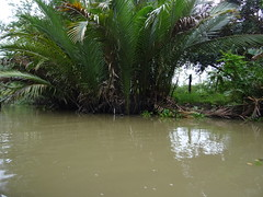 Boat tour in Mekong delta