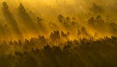 Monte Piquiño (Noel F.) Tags: sony a7r a7rii ii fe 100400 gm monte piquiño lampai loureiro regoufe teo galiza galicia neboa fog