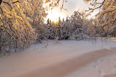 The sorceress winter (gubanov77) Tags: winter landscape nature snow trees moscow russia februar