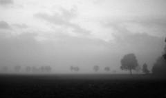 December sadness (Rosenthal Photography) Tags: nebel landschaft twiste 20181101 bohnste schwarzweiss anderlingen irfoto 35mm wense epsonv800 ff135 städte olympustrip35 ilfordlc2912920°c11min ilfordsfx asa200 infrarot analog baum dörfer siedlungen december sadness trist fog mist landscape fields trees olympus olympus35 trip35 dzuiko zuiko 40mm f28 ilford sfx sfx200 lc29 129 epson v800
