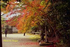 30 拷貝 (EH500) Tags: 日本 神護寺 japan 京都 楓葉 angenieux film rvp100 nikon fm2 桜 櫻花 底片 膠卷 135 cherry blossom nikoncoolscan nikoncoolscanls9000ed coolscan9000ed ならこうえん 愛展能 安琴 銀鹽 slr fuji 富士 rvp color fujichrome velvia fujichromevelvia slide 正片