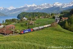 Re 620 075, Einigen (CH) (Alexandre Zanello) Tags: re620 re66 sbb cff ffs cargo einigen thunersee eiger mönch jungfrau alpes alpen alps alpi suisse schweiz svizzera svizra switzerland berneroberland