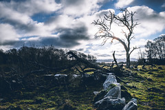 in the land where shadows lie (robert.lindholm87) Tags: canon zeiss milvus 35mm fullframe mirrorless nature tree dead trees landscape lightroom sweden light shadow stone stones foreground backlit contrejour sun sky clouds eos canoneosr