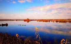 Immerso nel silenzio! (erman_53fotoclik) Tags: immerso silenzio quiete pace natura cielo acqua valli deltadelpo canne nuvole panorama riflesso samsung smj530f