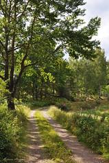 The old road (DameBoudicca) Tags: sweden sverige schweden suecia suède svezia スウェーデン småland fröreda road countrylane landsväg väg route weg via 道 みち