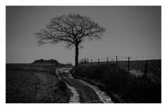 Tree alone (Claudio Nichele (@jihan65 on Twitter)) Tags: tree arbre solitude paysage lanscape winter hiver arbreseul treealone nature naturelove wintertime hiking neige gel snow ice